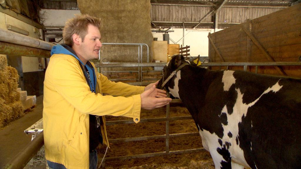 """Ole ist total aufgekratzt, da die ersten Kunden über seine Kuh-Webseite angebissen haben. Als er jedoch auf dem Bauernhof versucht, seiner Kuh ein """"Date"""" mit einem Ochsen zu verschaffen, macht er sich komplett zum Affen."""