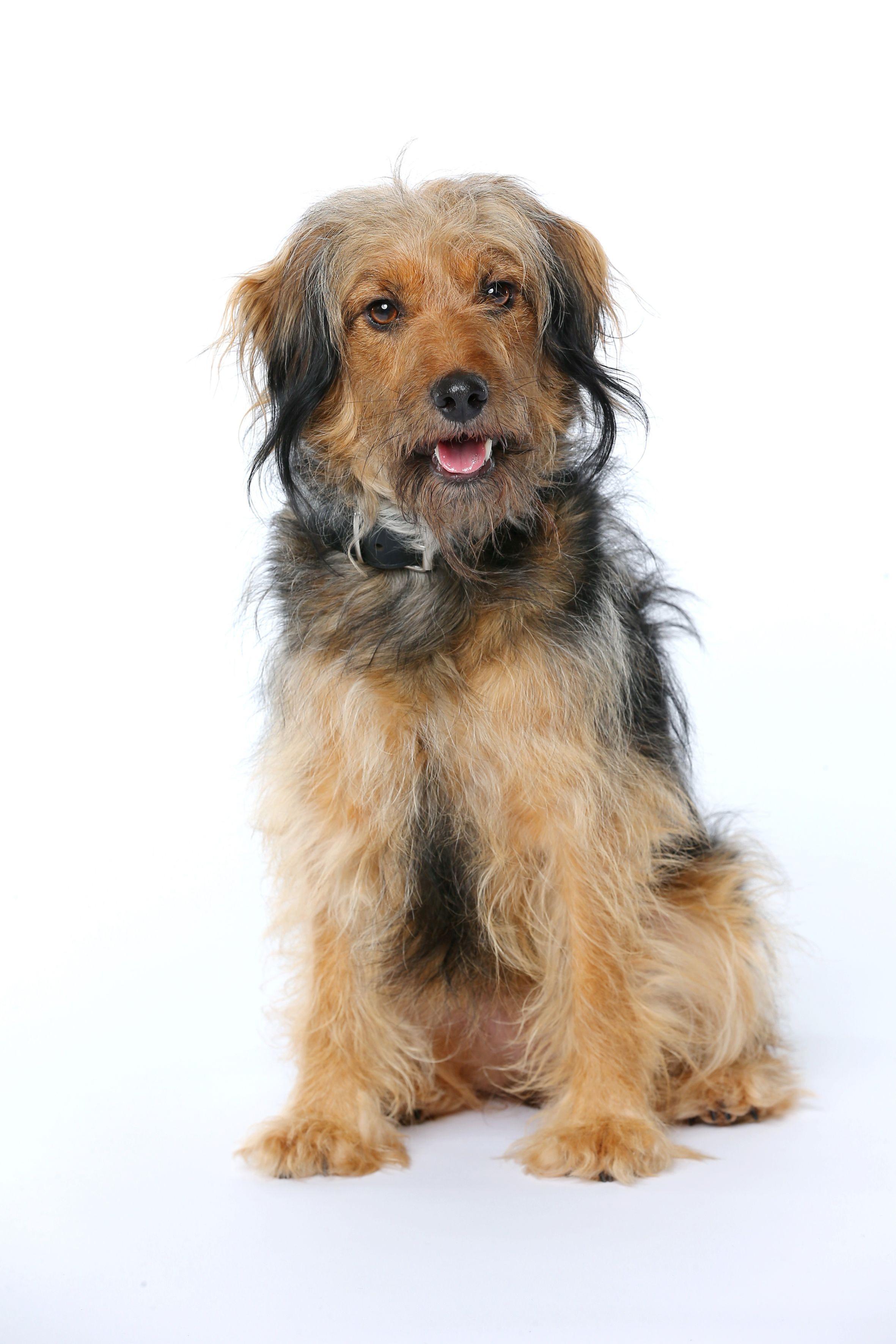 """Der Hund """"Stinker"""" (Quelle: RTL / Stefan Gregorowius)"""