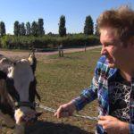 Ole geht immer mehr in seinem Rinder-Projekt auf und hat bereits eine Webseite eingerichtet. (Quelle: RTL 2)