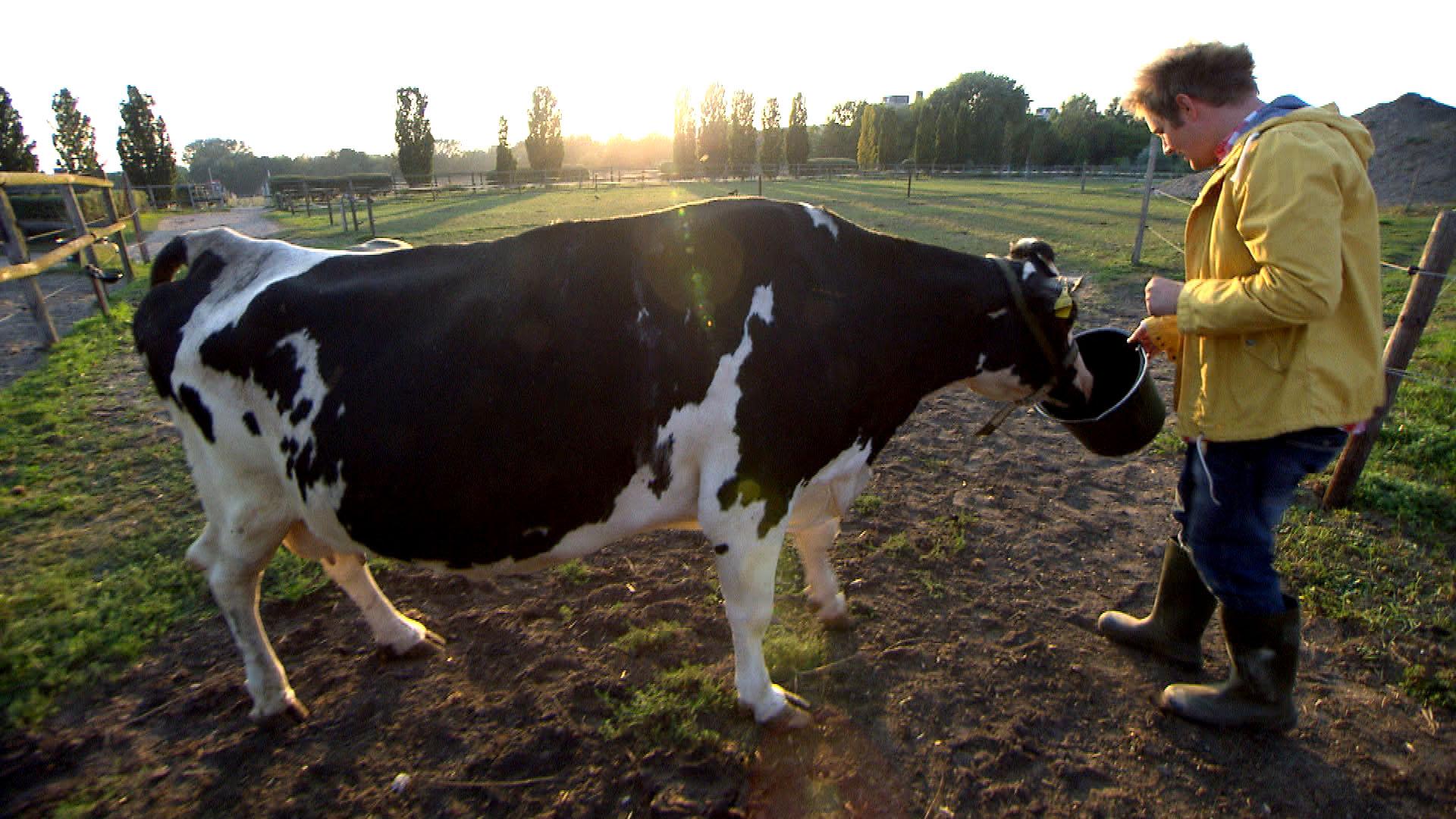 """Ole will den Dung seiner Kuh """"Alessica"""" zu Brenn- und Baustoff weiterverarbeiten. (Quelle: RTL 2)"""
